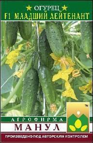 Огурцы ► выращивание: рассада ✩сорта ►посадка ✿уход!