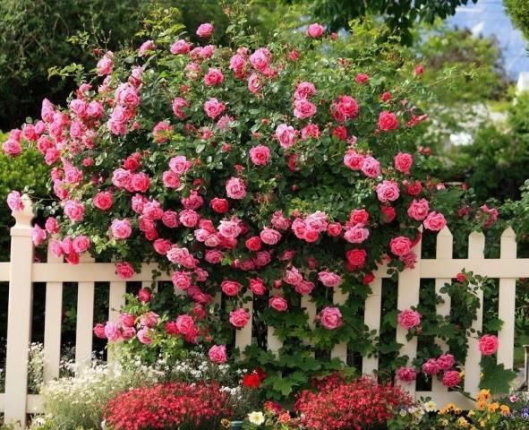 Когда можно пересаживать розы с одного места на другое