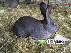 Кролики: симптомы болезни, лечение и уход, профилактика