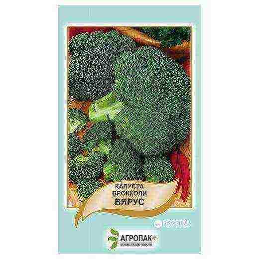 Брокколи: выращивание и уход. сорта брокколи
