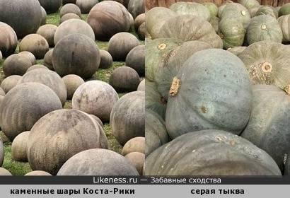 Описание высокоурожайной тыквы сорта волжская серая