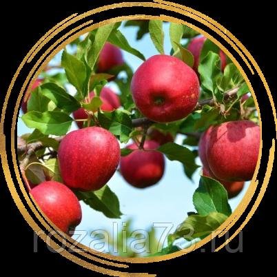 Яблоня брянское