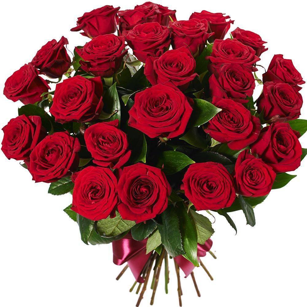 Роза плетистая красная: описание и названия 10 сортов, особенности посадки, выращивания, ухода, цветения, отзывы и фото