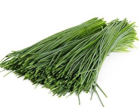 Лук шнитт – выращивание из семян своими руками