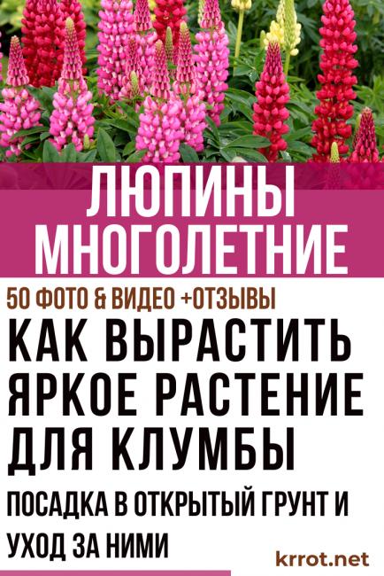 Выращивание и уход за хостой в открытом грунте: посадка весной, летом и осенью