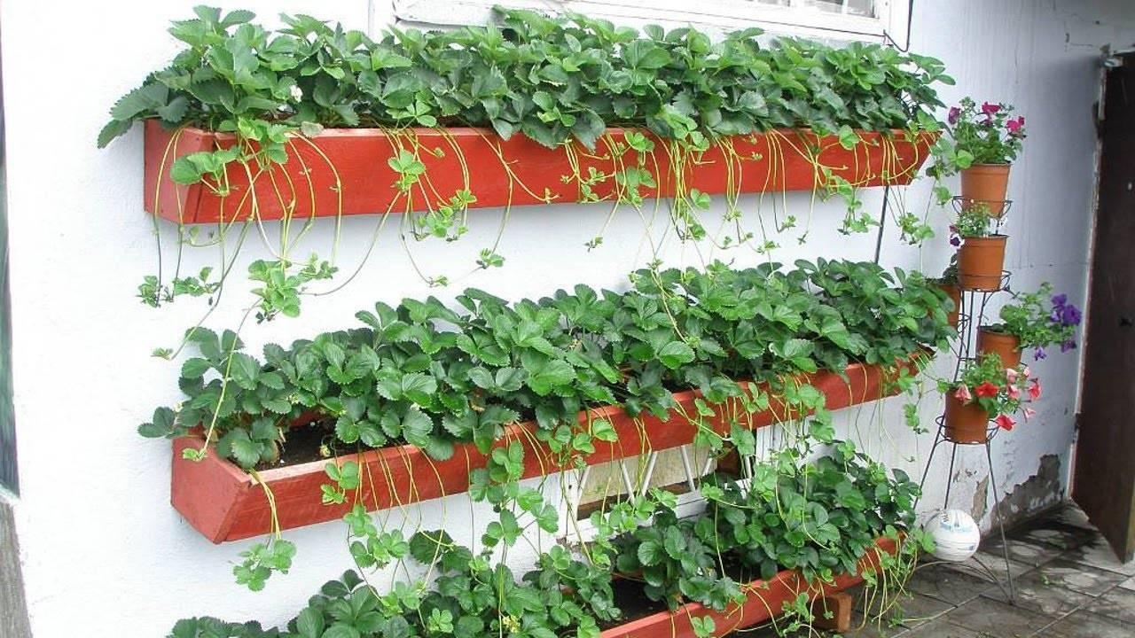 Как правильно сделать вертикальную грядку своими руками для клубники: выращивание на даче и балконе