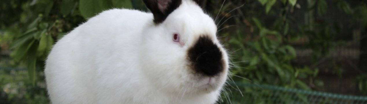О глистах у кроликов: основные симптомы и лечение, чем делать дегельминтизацию