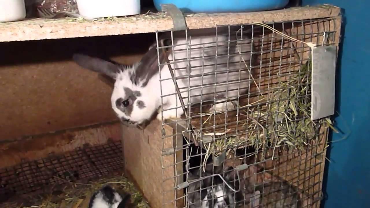 Питание крольчихи после окрола в холодное и теплое время года