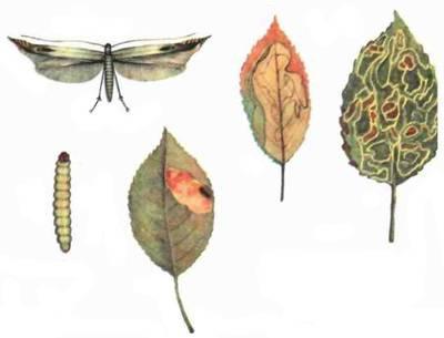Паутина на деревьях, как избавиться. как бороться с гусеницами на яблоне