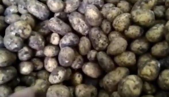 «наташа» — картофель для любителей желто плодных сортов