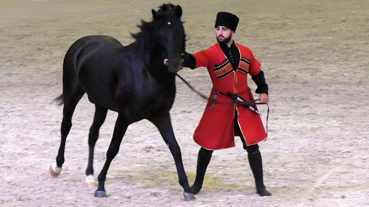 Кабардинская лошадь – воплощение любви черкесов