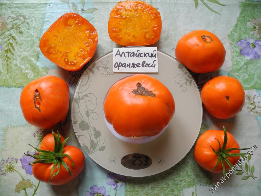 Томат алтайский мед: описание сорта, отзывы, фото, урожайность   tomatland.ru
