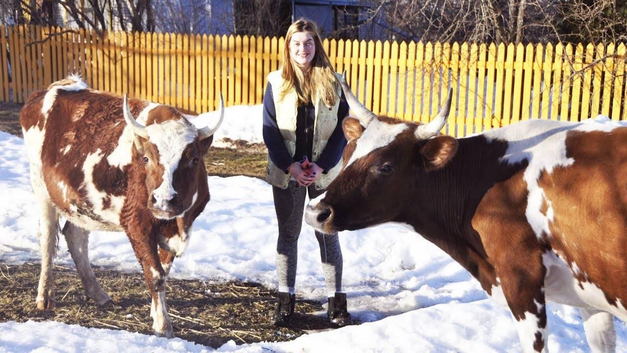 Сколько сена съедает корова, бык и теленок за день, сутки, зиму, год