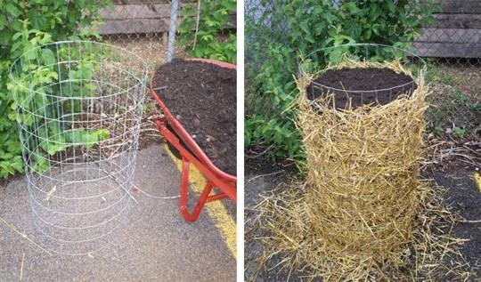 Как выращивать картофель в бочке