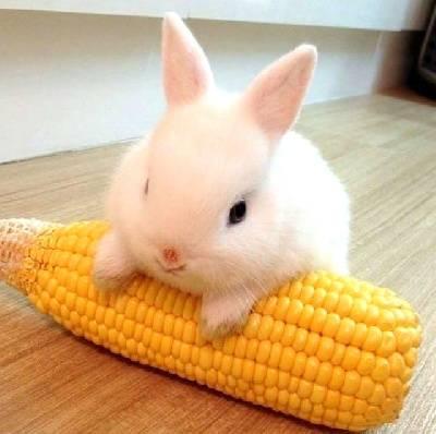 Можно ли кроликам арбузные корки: вся правда о полезном лакомстве
