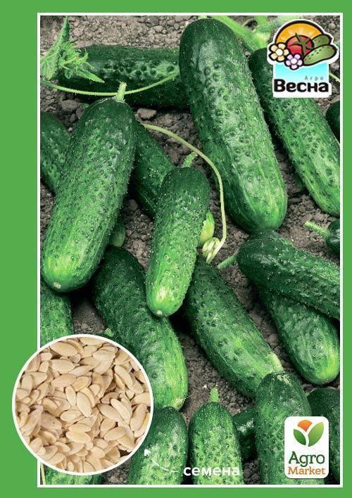 Огурец клавдия – 7 особенностей и 12 советов по выращиванию