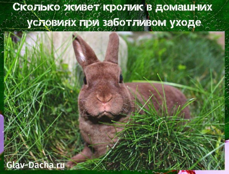 Сколько живут кролики - продолжительность жизни кроликов домашних пород