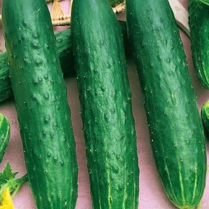 Отечественный гибрид огурцов «апрельский f1»: фото, видео, описание, посадка, характеристика, урожайность, отзывы. можно выращивать на подоконнике или балконе
