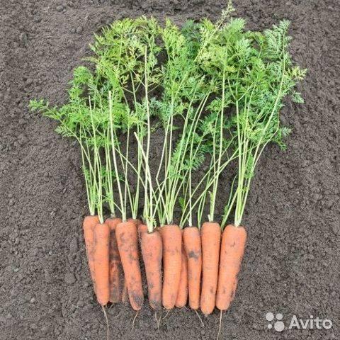 Лучшие сорта семян для открытого грунта, какие выбрать и почему