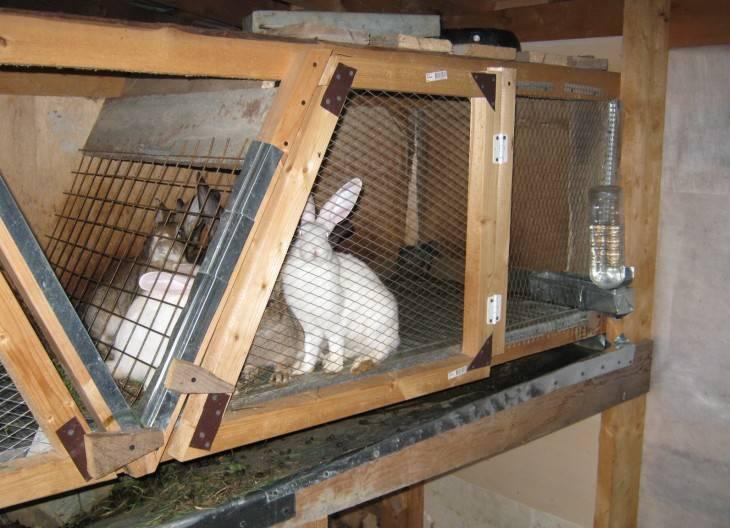 Оптимальные размеры клеток для кроликов: чертежи