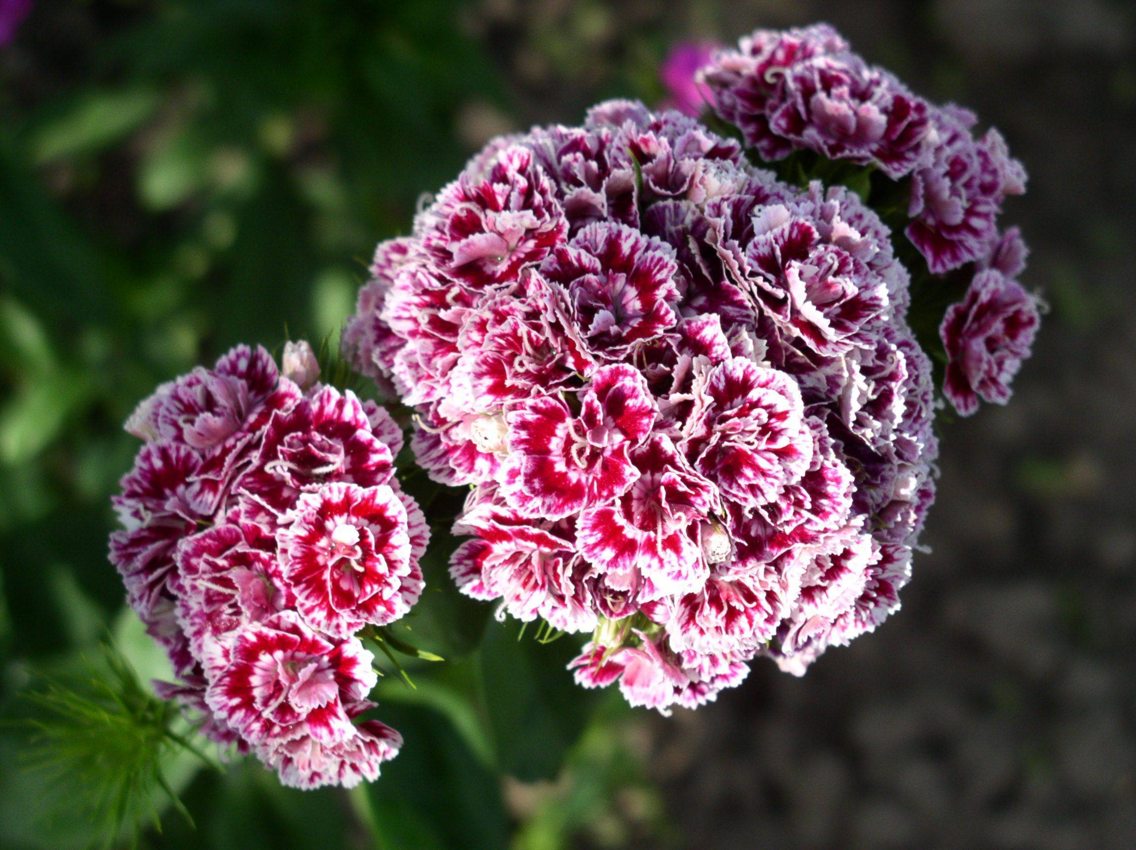 О декоративных растениях для сада: описание, как выглядят, лучшие сорта