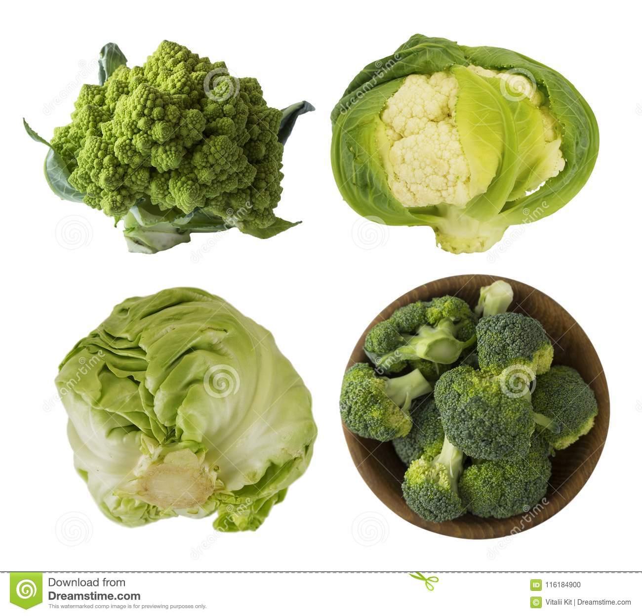 Основные виды капусты: фото и названия разновидностей, особенности выращивания