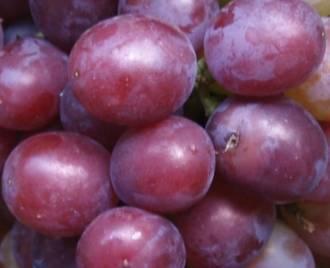Сорта винограда для вина: секреты виноделия и обзор лучших сортов. рекомендации по посадке и сбору урожая (110 фото и видео)