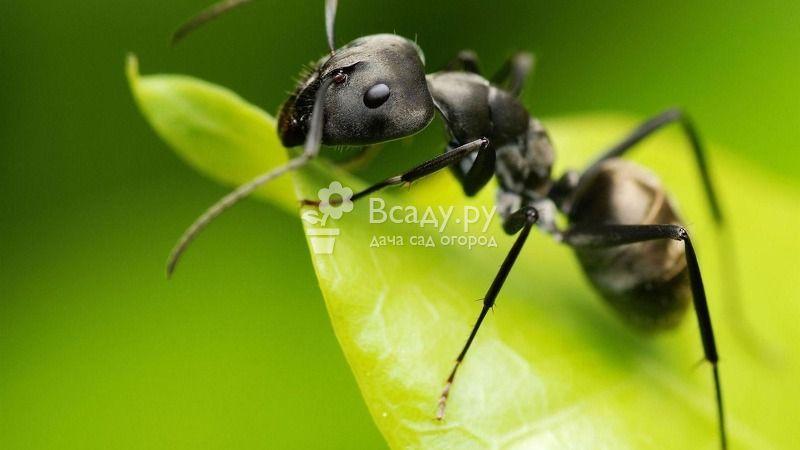 Методы борьбы с муравьями на деревьях и кустарниках: способы и средства защиты