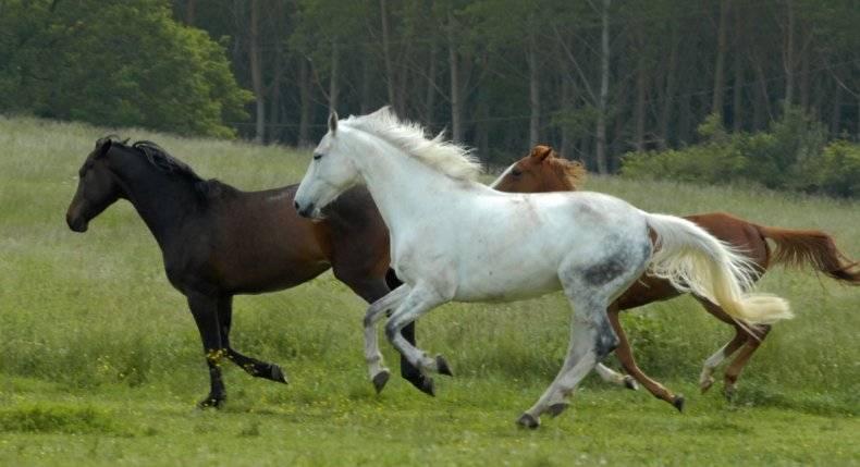 Как понять, нужны ли вашей лошади подковы - wikihow