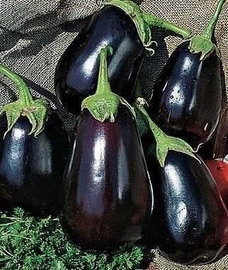 Баклажан черный красавец: описание сорта