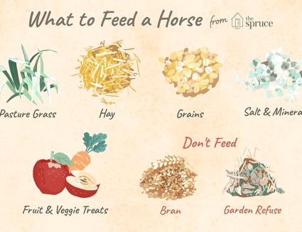 Что едят лошади? каким кормом питаются? зачем кормят подкормками «дикий медведь»? особенности кормления лошадей