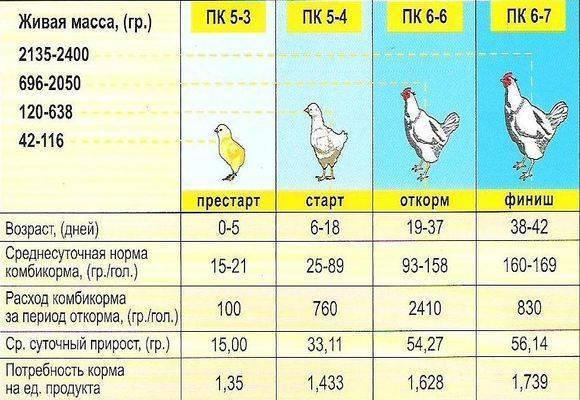 Выращивание цыплят: чем кормить в домашних условиях