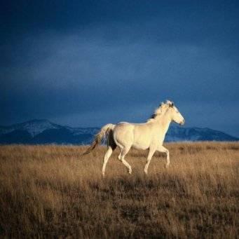 Приручаем лошадь: основные приёмы и правила