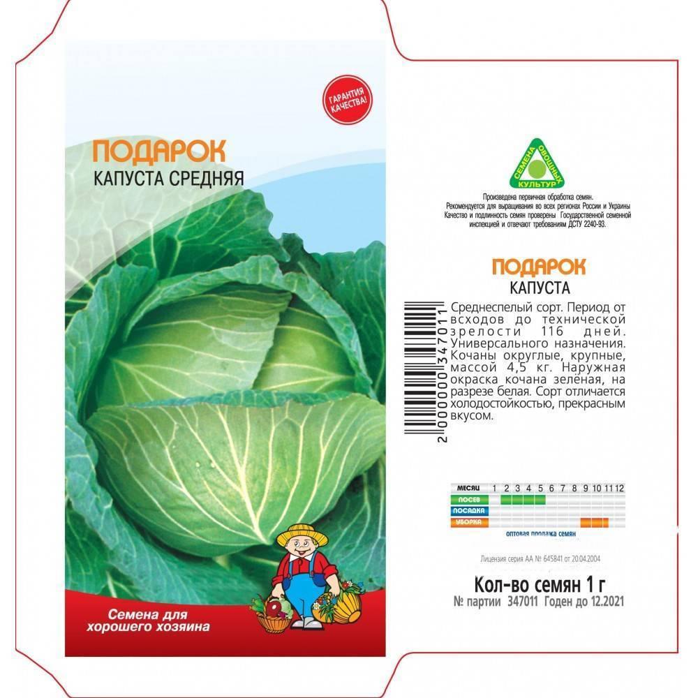 Капуста подарок: 8 особенностей и 12 советов по выращиванию и уходу