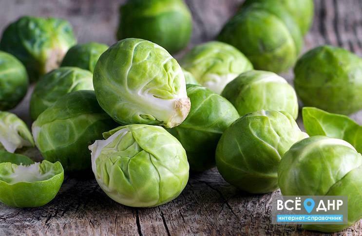 Брюссельская капуста: всё о выращивании и вредителях