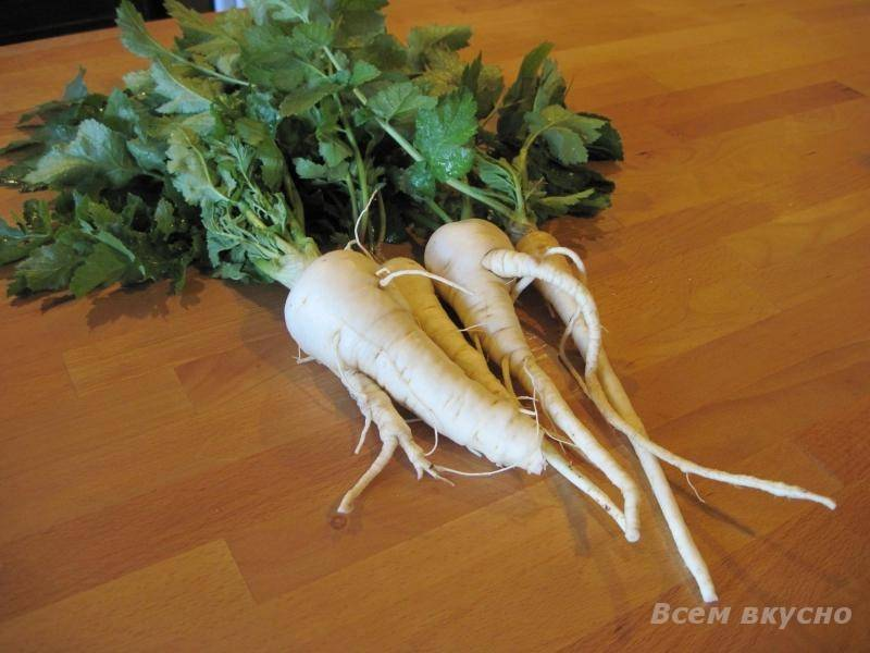 Овощ пастернак – тонкости выращивания, полезные свойства растения