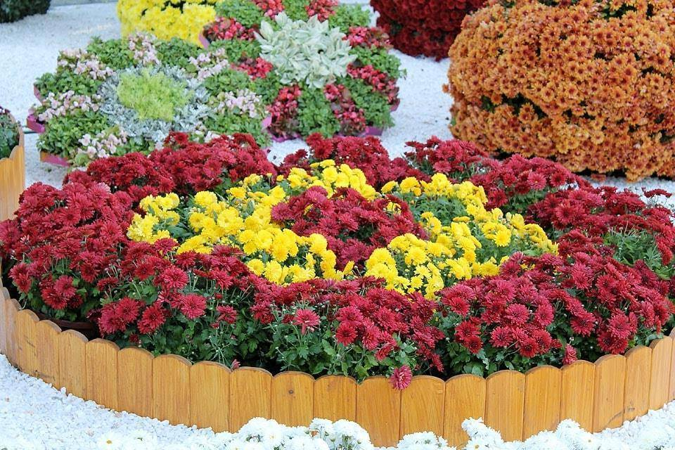 Низкорослые цветы для клумбы цветущие все лето - перечень цветов и идеи для клумб