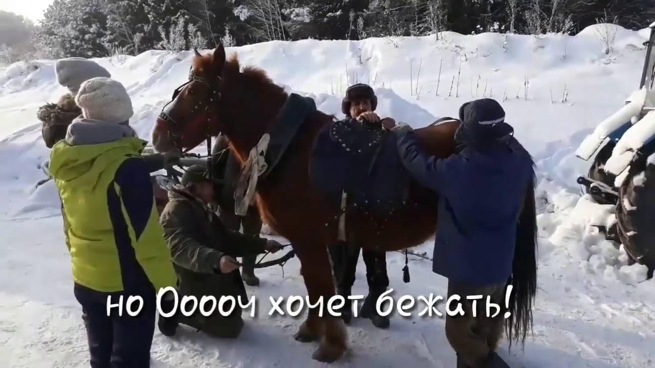 Как запрягают лошадь: способы запряжки с пошаговой инструкцией