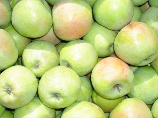 Яблоня северный синап: описание сорта, фото, отзывы садоводов