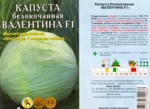 Капуста валентина: характеристика и агротехника популярнейшего позднего сорта