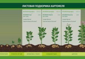 Удобрение кемира – отличия от остальных смесей, применение для растений