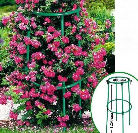 Как сделать опоры для плетистых роз своими руками?