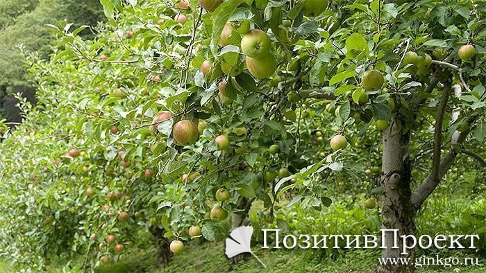 Садовые деревья и кустарники: список, особенности ухода и отзывы