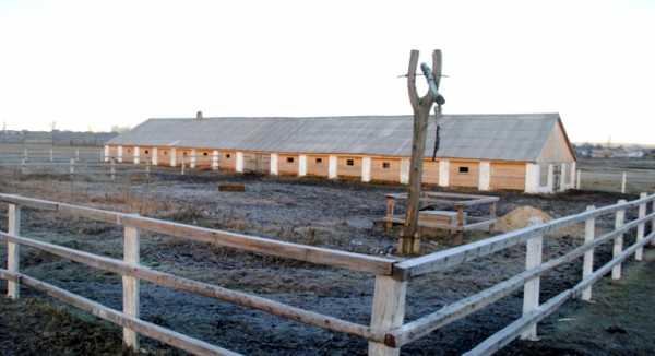 Как возводить и обустраивать сарай для быков?