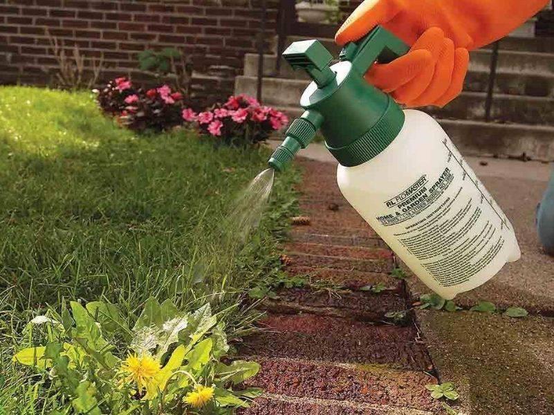Чем опрыскать траву чтобы она не росла. как избавиться от травы на участке огорода навсегда? уделяем внимание междурядьям