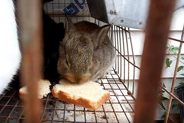 Что можно давать кроликам?