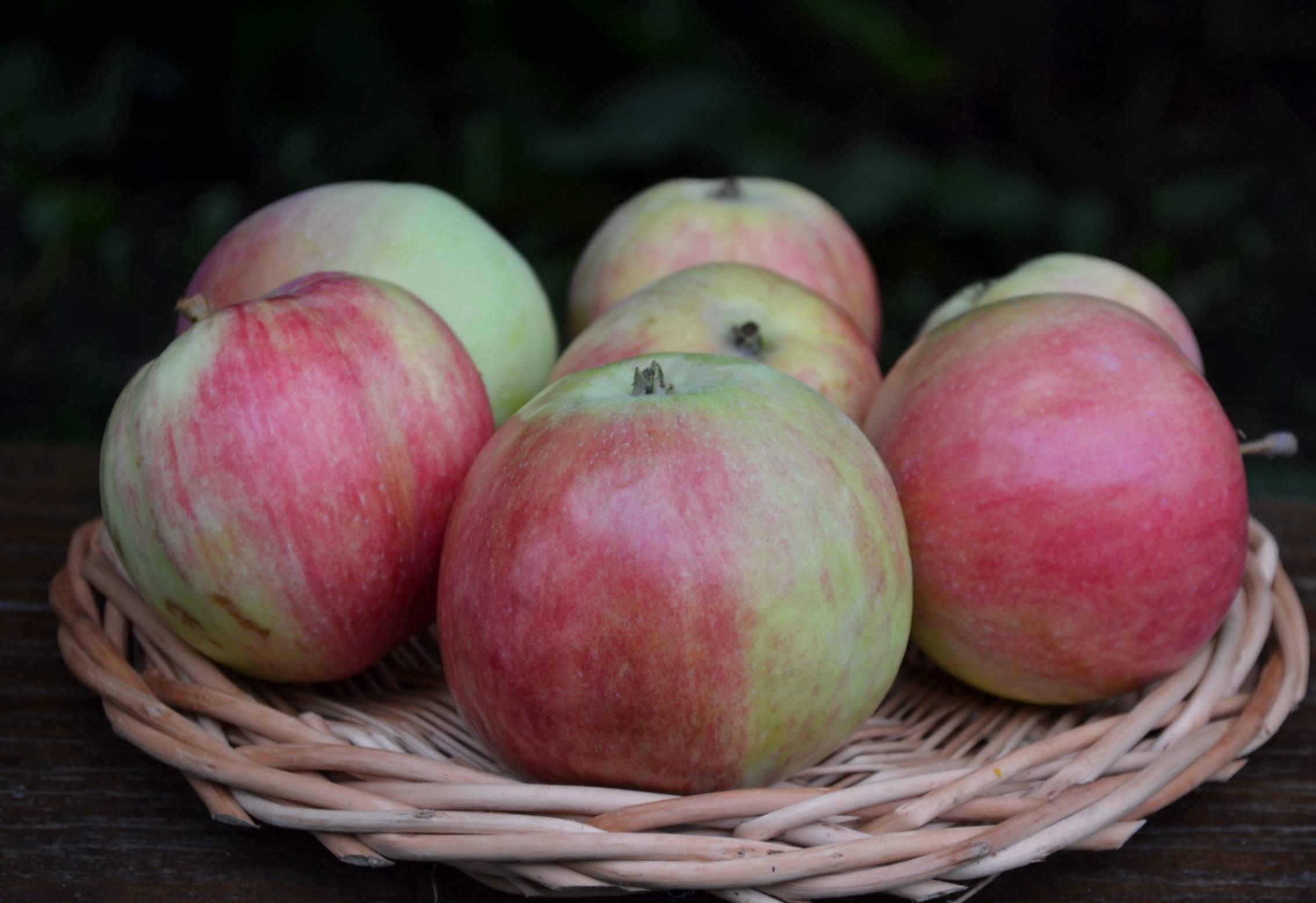 кельтские племена, яблоня башкирский красавец фото описание тебя