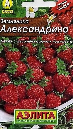 Кто выращивал землянику александрию? - запись пользователя елена  ℒℴѵℯ  (elleniy) в сообществе сад, огород в категории вопросы обо всём - babyblog.ru