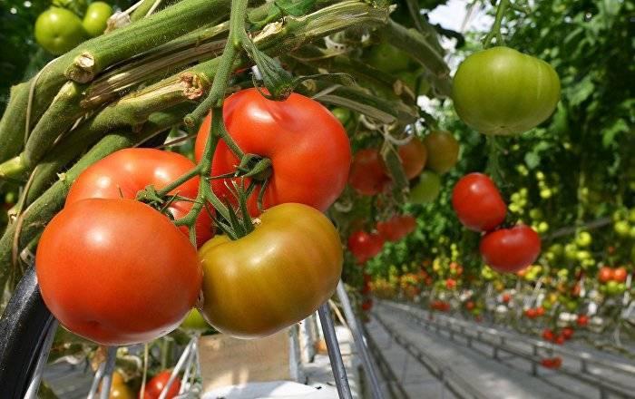 Как подкормить рассаду томатов — сроки и виды удобрений для максимального урожая