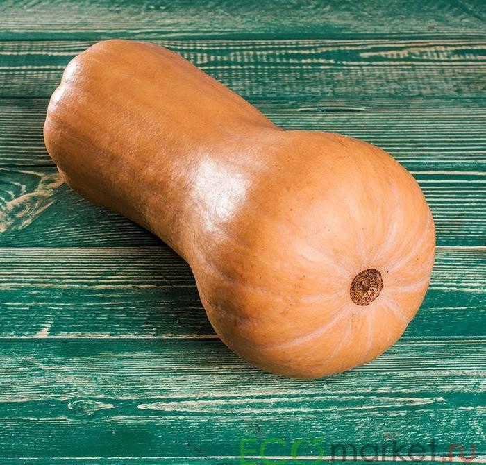 24 лучших сорта мускатной тыквы